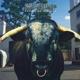 SWERVEDRIVER-MEZCAL HEAD -HQ COLORED/INSERT-