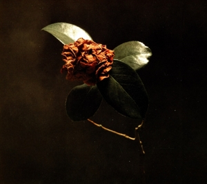 ST. PAUL & THE BROKEN BON-YOUNG SICK CAMELLIA -DIGISLEE-