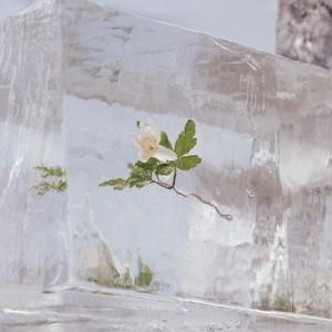 EFTERKLANG-WINDFLOWERS -COLORED-